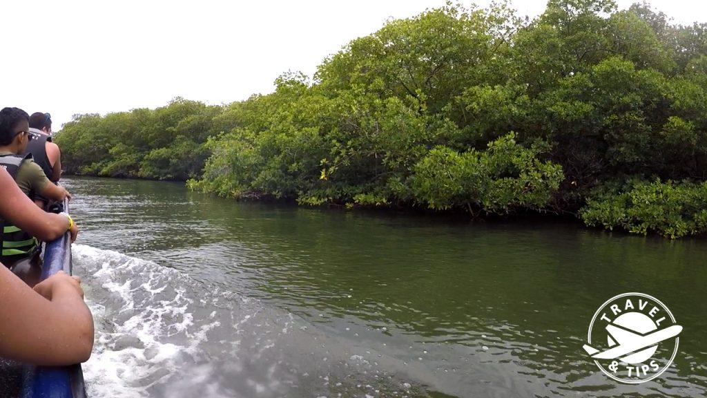 Zona de manglares en San Andres
