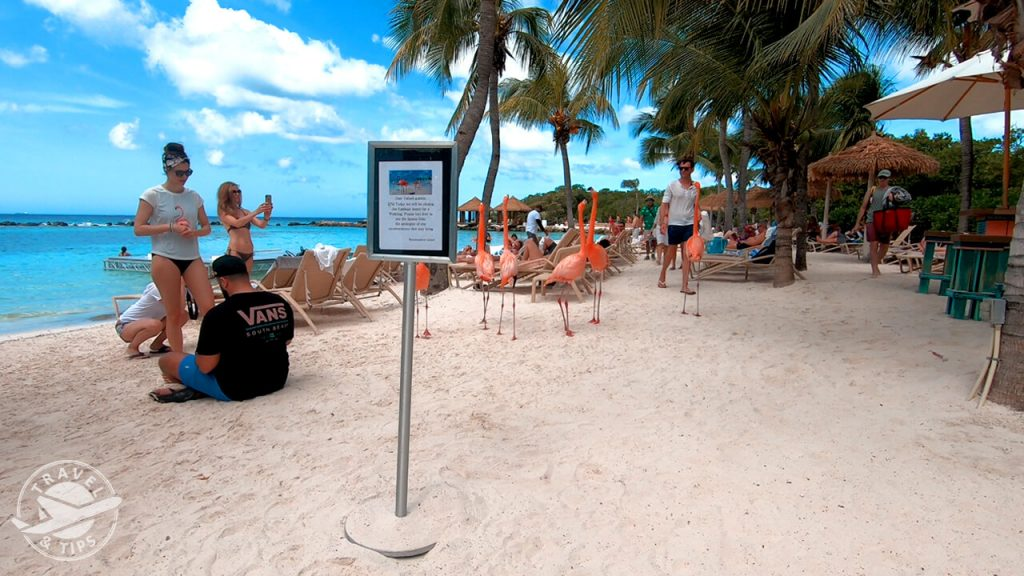 6 flamingos en esta playa