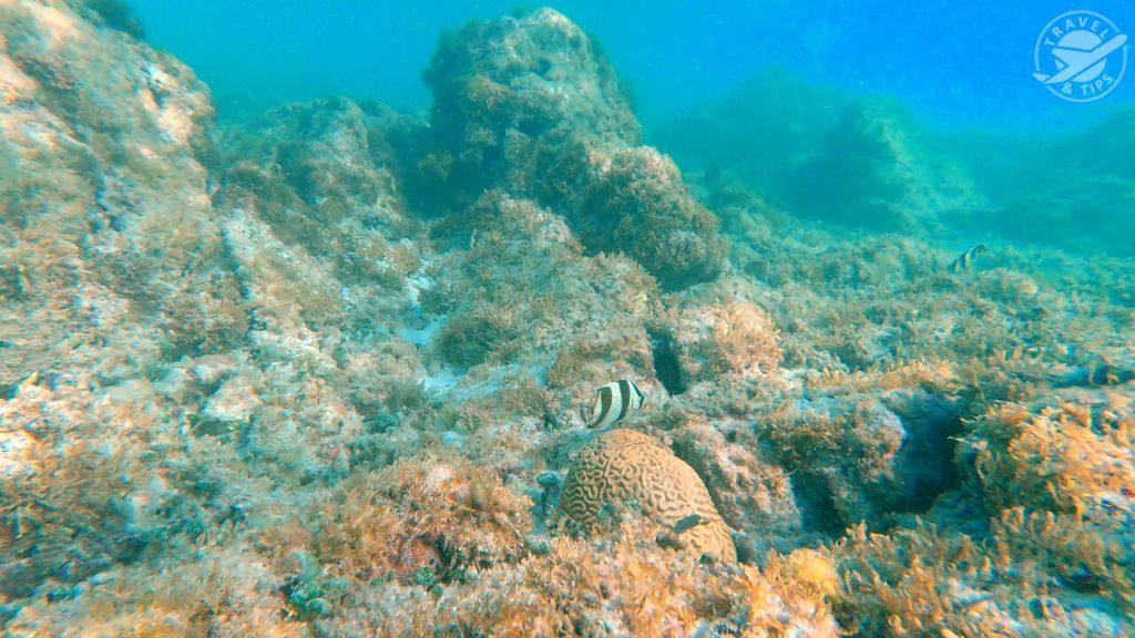 Lecho marino Arashi